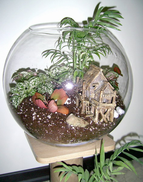 کویر سبزتراریوم terrarium - باغ شیشه ای