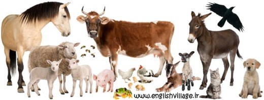 farm animals + bees, frogs, dog and cat - حیوانات اهلی