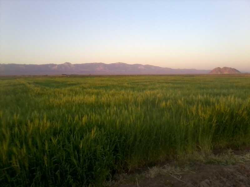 روستای چشام