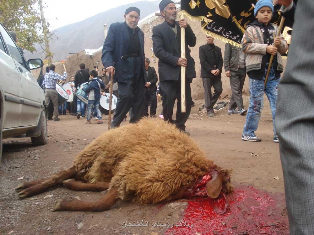 قربانی کردن گوسفند در جلوی دسته هیات عزاداران انگشتجان در روز عاشورا