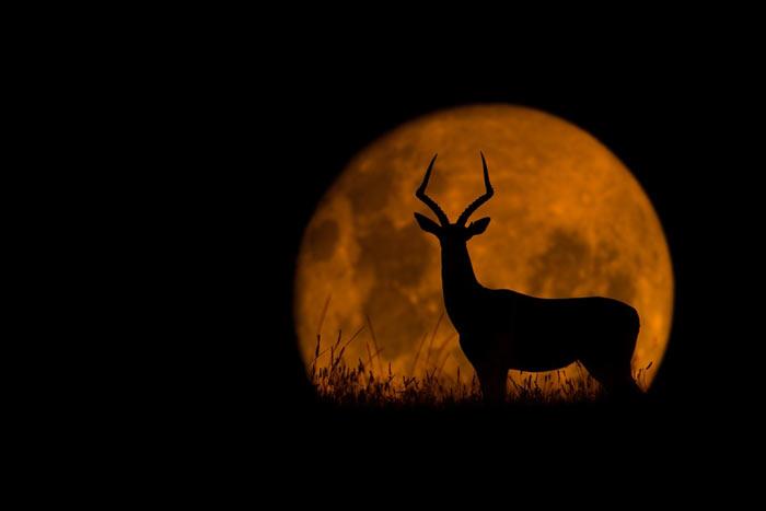 هنر عکاسی: طلوع خورشید در قلمرو حیوانات