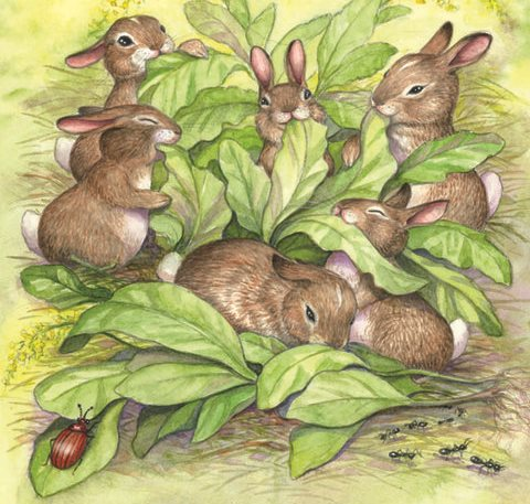 Flopsy bunnies - خرگوش کوچولوها