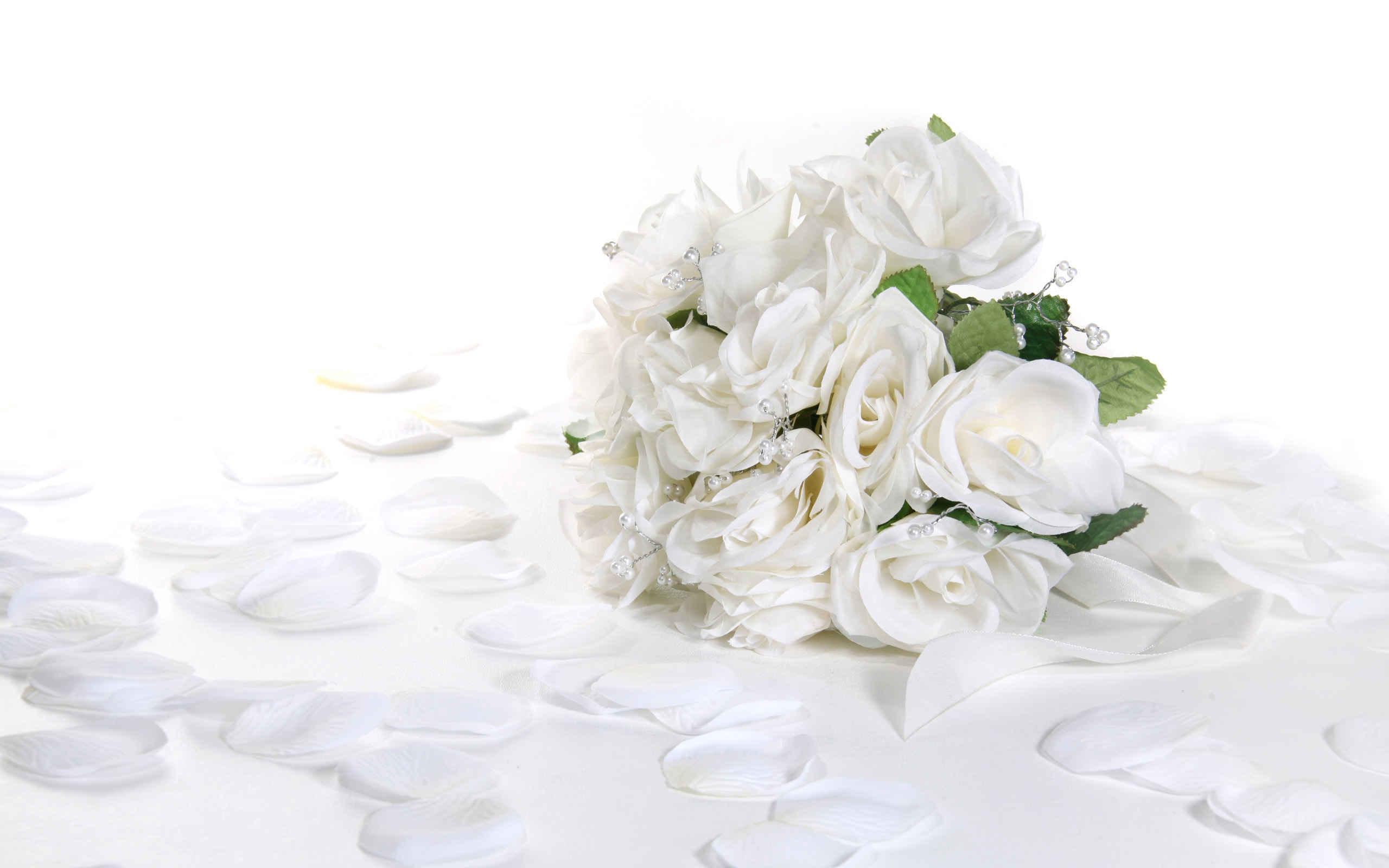 تصاویر گل رز