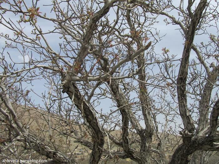 درخت شاخ شاخی