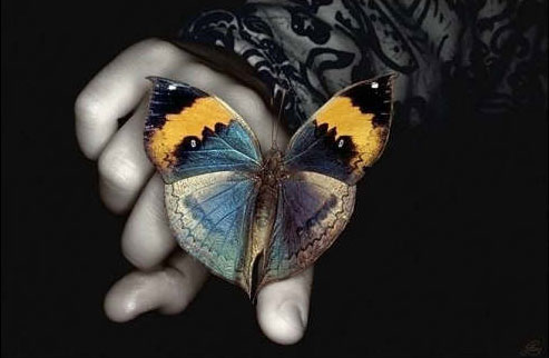 http://s4.picofile.com/file/7801307090/Butterfly_by_baljeet2506.jpg
