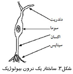 ساختار یک نرون بیولوژیک
