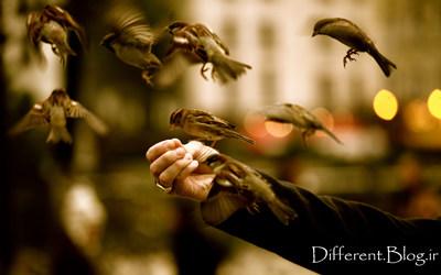 عکس + عکس پرنده + عکس طبیعت + گنجشک + غذا دادنب به پرنده ها + گنجیشک + پرواز + sparrows + hd