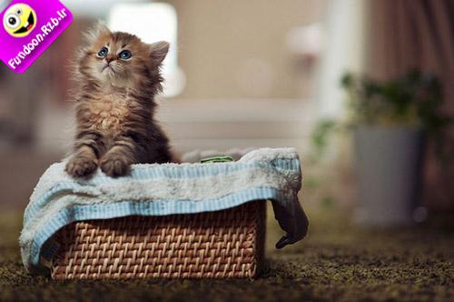 عکس گربه جیگر