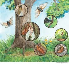 پاورپوینت دگردیسی و دیاپوز در حشرات