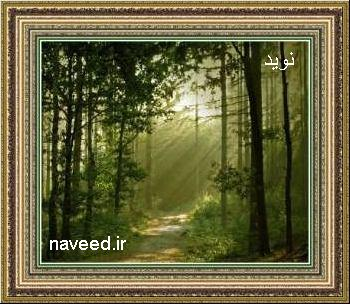 http://s4.picofile.com/file/7863110535/naveed_jpg.jpg