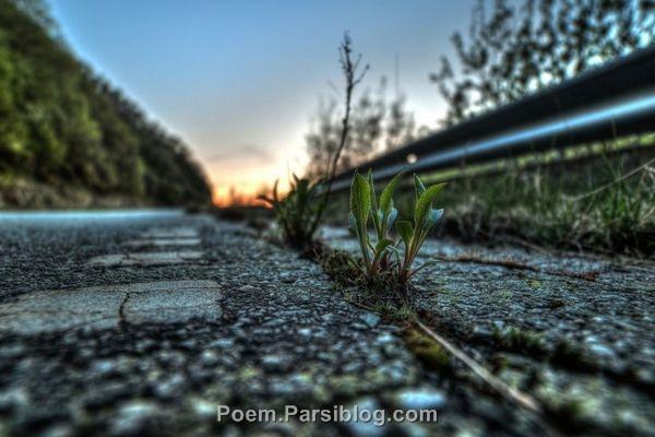 سر هر جاده منم ، چشم به راهی که تویی