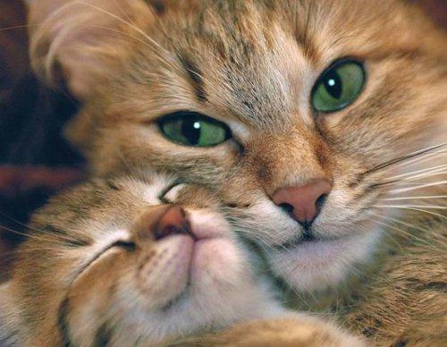 http://s4.picofile.com/file/7868283973/mother_cat.jpg