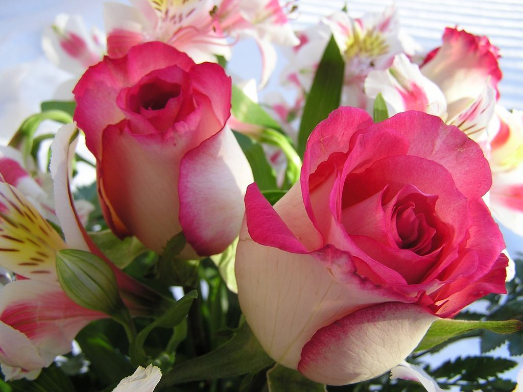 http://s4.picofile.com/file/7892141284/Beautiful_Flowers.jpg