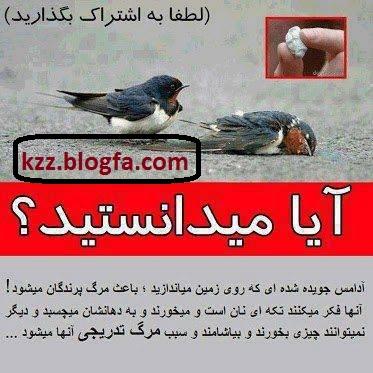 http://s4.picofile.com/file/7897850535/sve0jyewp85w1vtjvoh5.jpg