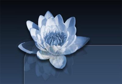 قالب گل