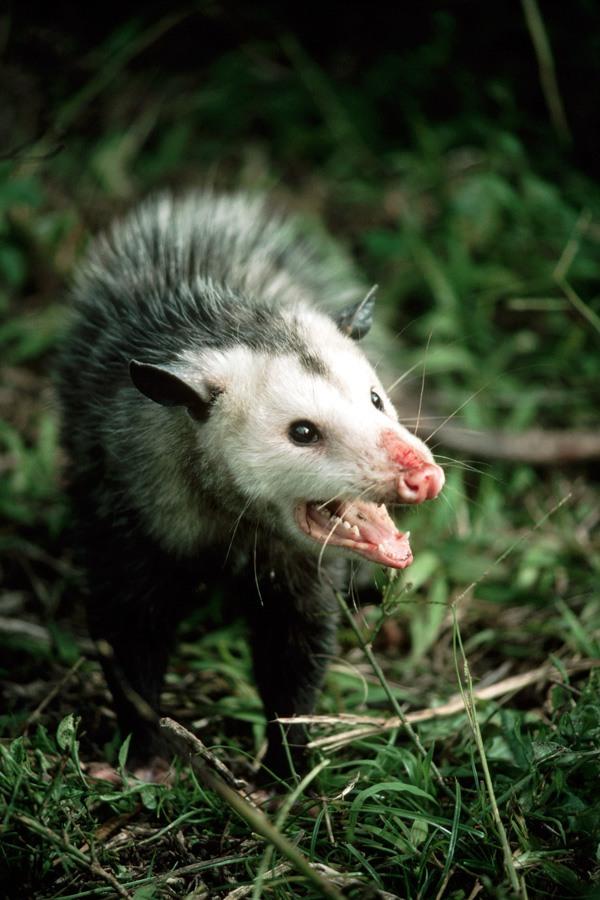 مطالب داغ: بدبوترین جانوران روی زمین