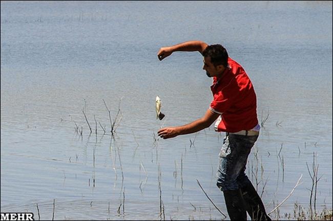 جشنواره خانوادگی ماهیگیری با قلاب در نیر برگزار شد