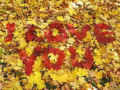 |http://uniqelove.blogfa.com|عکس های عاشقانه,عشق,پاییز عشق,پاییز|http://uniqelove.blogfa.com|