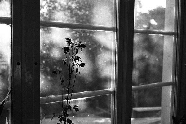شراب وسوسه در جان من مریز، که من هزار پنجره از حسرت نگاه ، پُرم