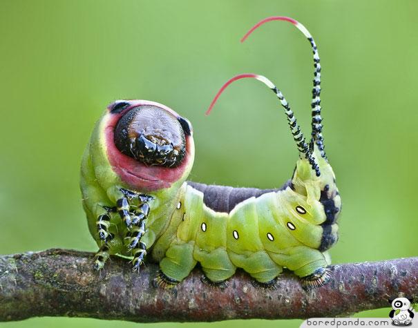 مطالب داغ: باور می کنید این موجودات زیبا کرم باشند؟