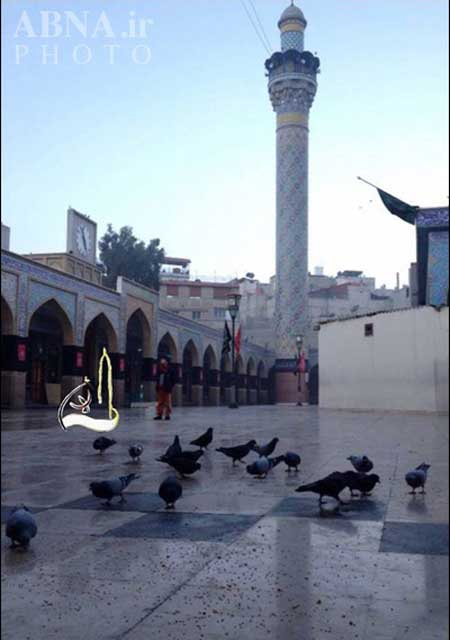 کبوتر های حرم حضرت زینب (س)