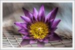 بک گراندهای زیبا از گل های زیبا