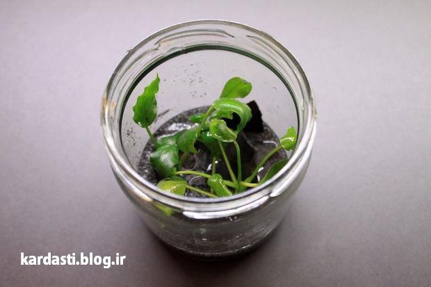 آموزش درست کردن آکواریوم گیاهی با بطری