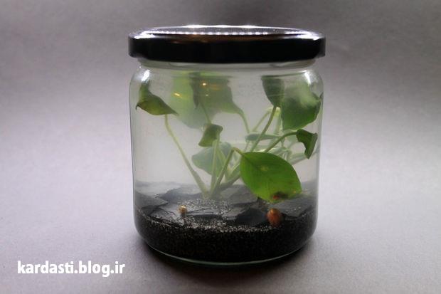 آموزش ساخت آکواریوم در بطری شیشه ای
