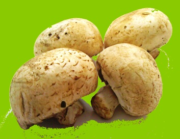 تهیه ساده و اصولی بذر قارچ هریسیوم در خانه