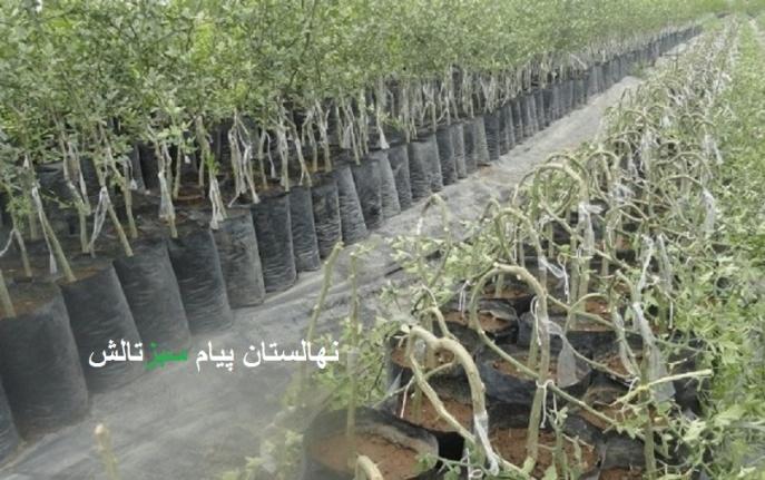 روش صحیح درختکاری