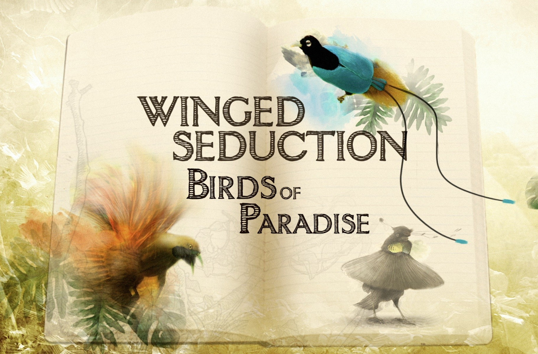 دانلود مستند پرنده های بهشتی
