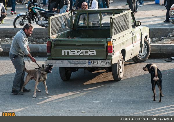 اینجا تهران است/بازار خرید فروش سگ