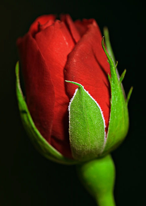 http://s4.picofile.com/file/8168886984/afghanistan_girl_blogsky_com_%DA%AF%D9%84_%D8%B1%D8%B2.jpg
