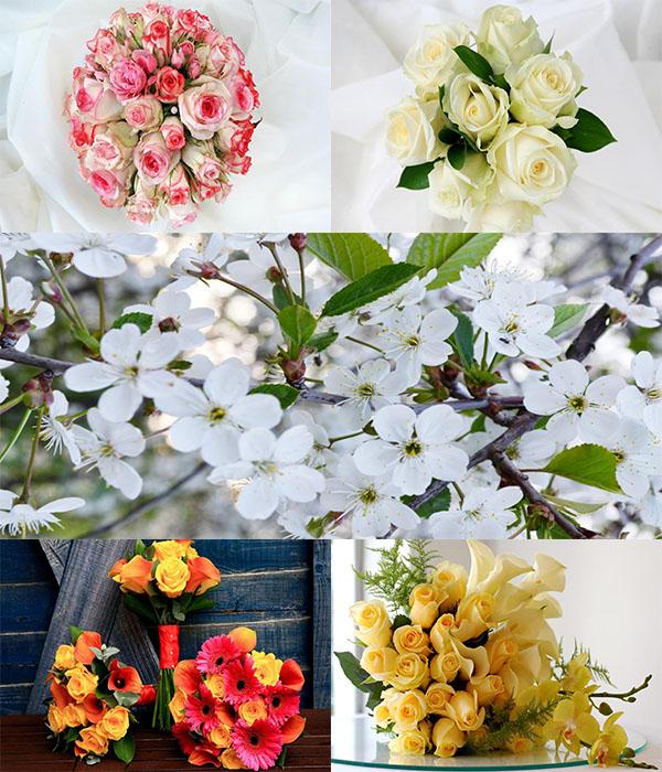 دانلود عکس های فوق العاده زیبا از گل ها