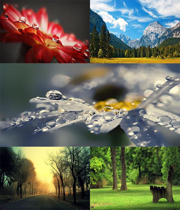 دانلود والپر های فوق العاده زیبا از دل طبیعت
