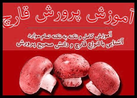 فواید کشت قارچ نسبت به دیگر محصولات در چیست