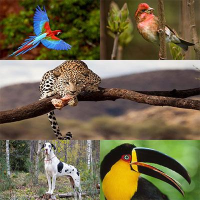 جدیدترین و بهترین عکس ها از حیوانات با کیفیت عالی