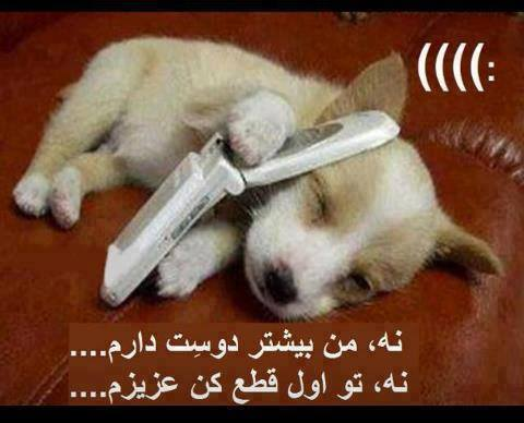 mobiledog - تصاویر دیدنی و خنده دار جالب