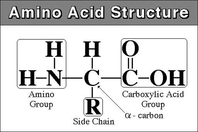 آمینو اسید ها و دانستنی هایی در مورد آن