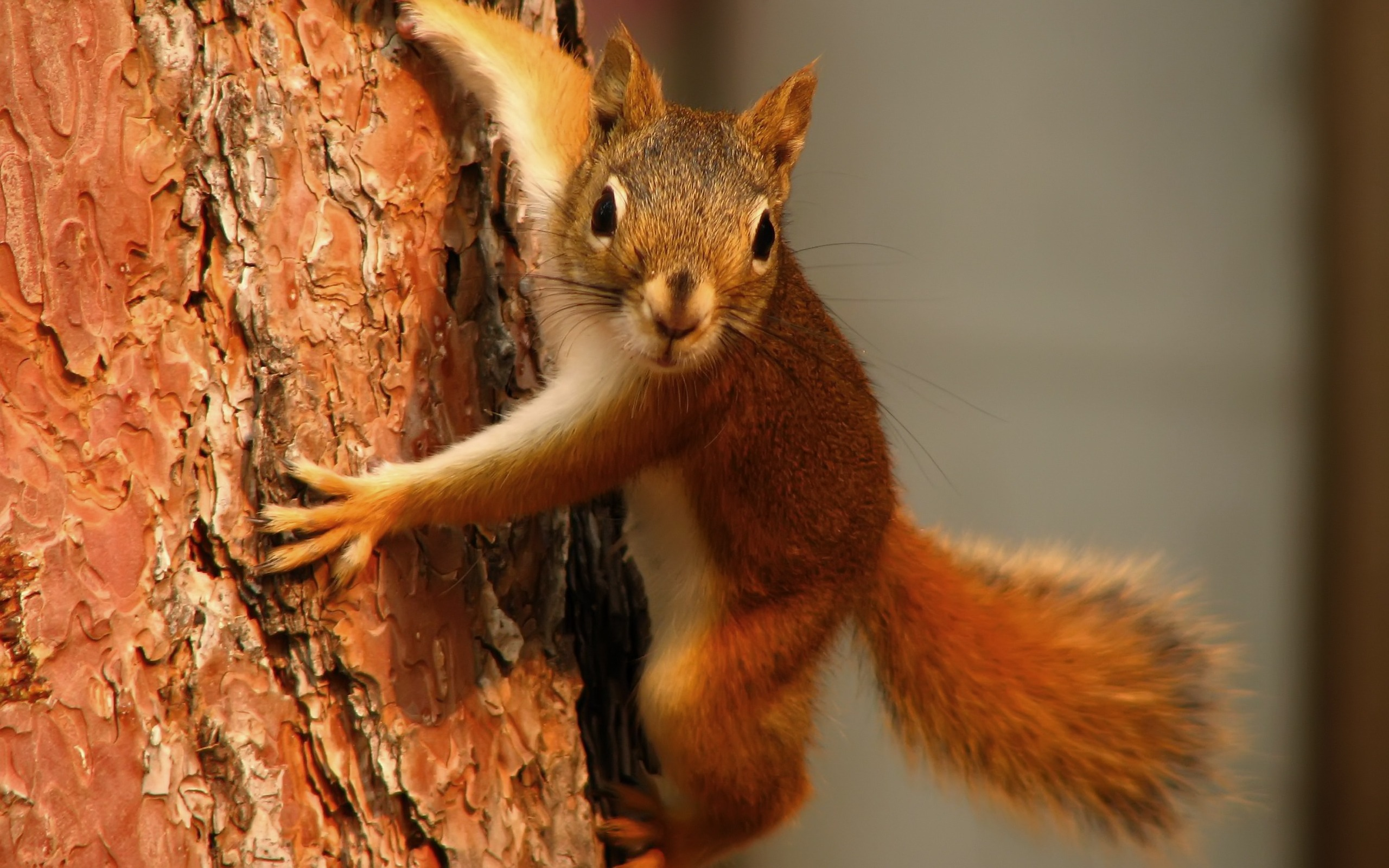 http://s4.picofile.com/file/8179847784/squirrel_wallpaper_other_animals_wallpaper_2560_1600_widescreen_405.jpg