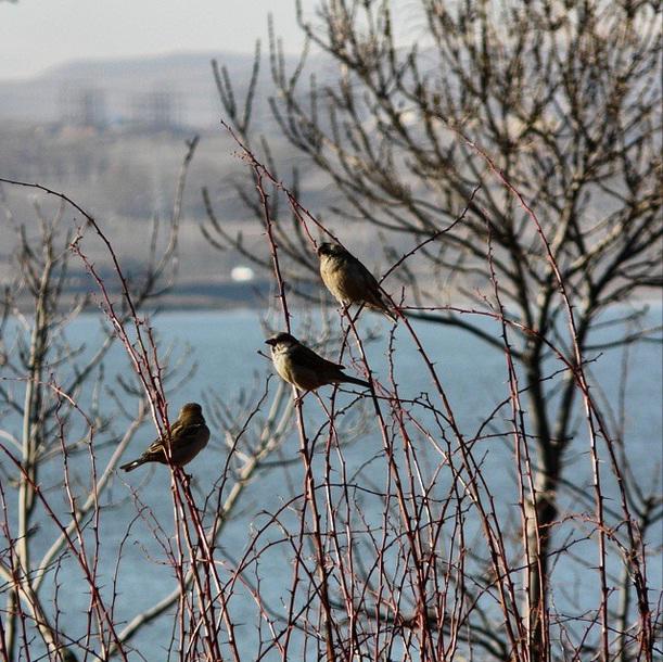 پرنده بر سر شاخ و بر کنار آب