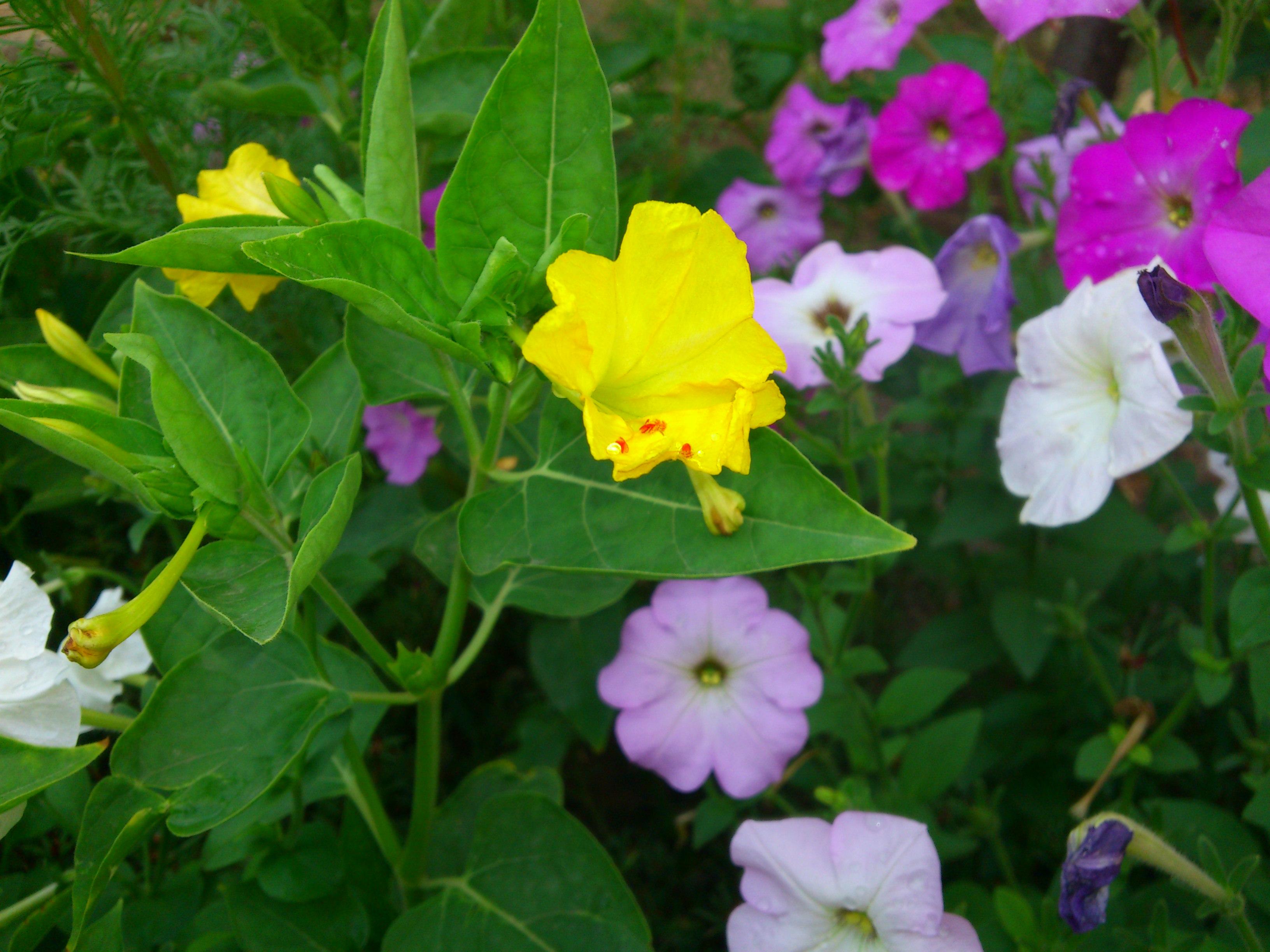 عکس2:«گل زرد»