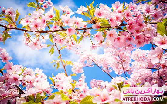بهار آفرین باش - عطر خدا www.atrekhoda.com