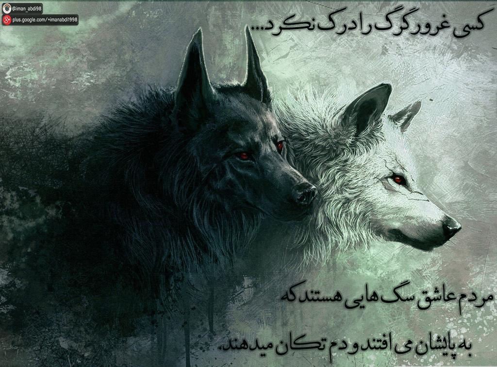 کسی غرور گرگ را درک نکرد...