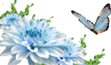 قالب پروانه