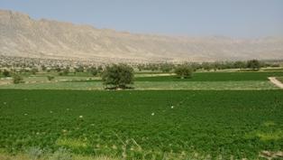 کشاورزی  روستای دهپاگاه کازرون 11 اردیبهشت94