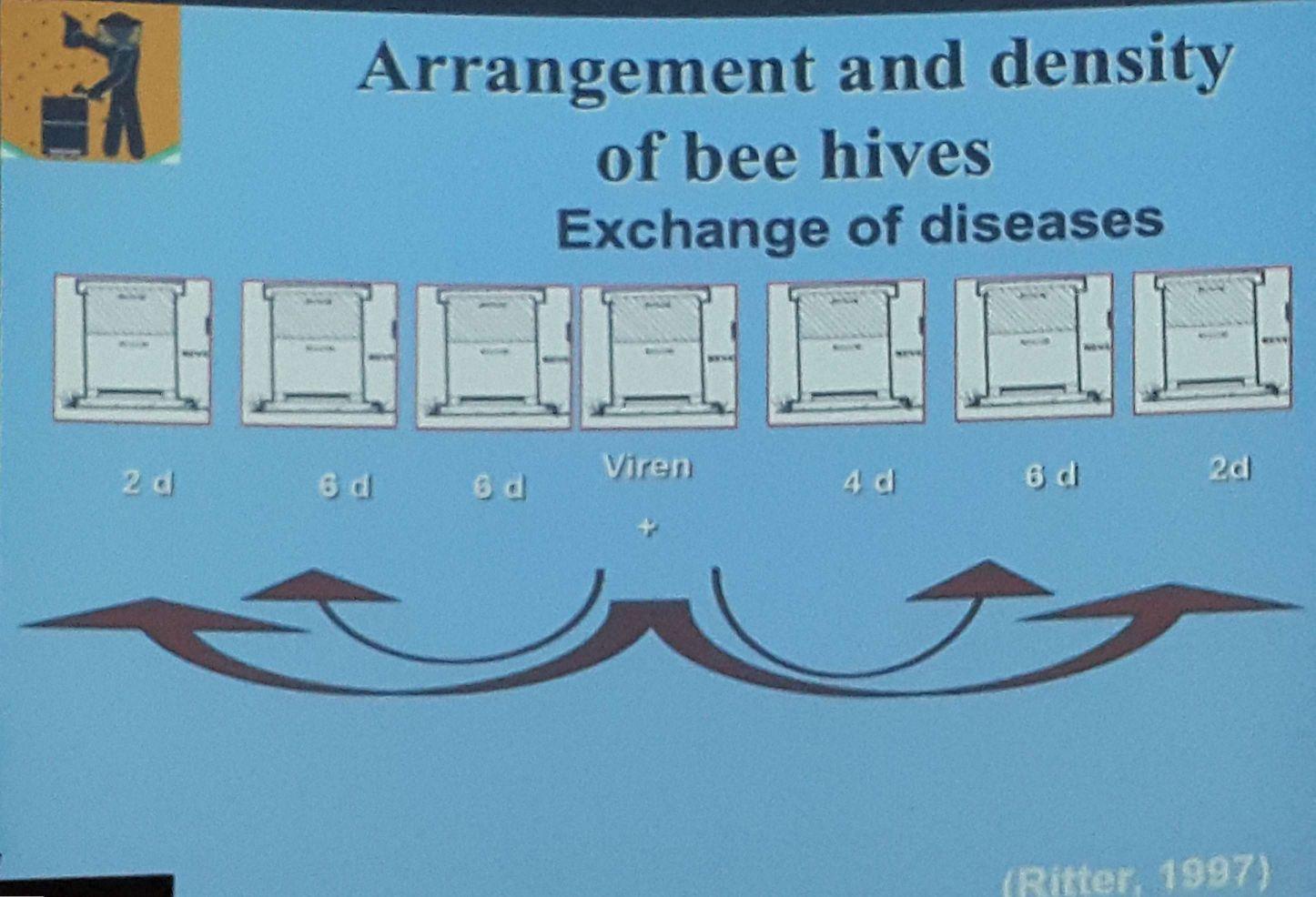 ورود اشتباهی زنبورهای یک کندوی مریض و آلوده شدن کندوهای کناری