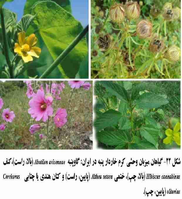 گیاهان وحشی میزبان کرم خاردار پنبه در ایران