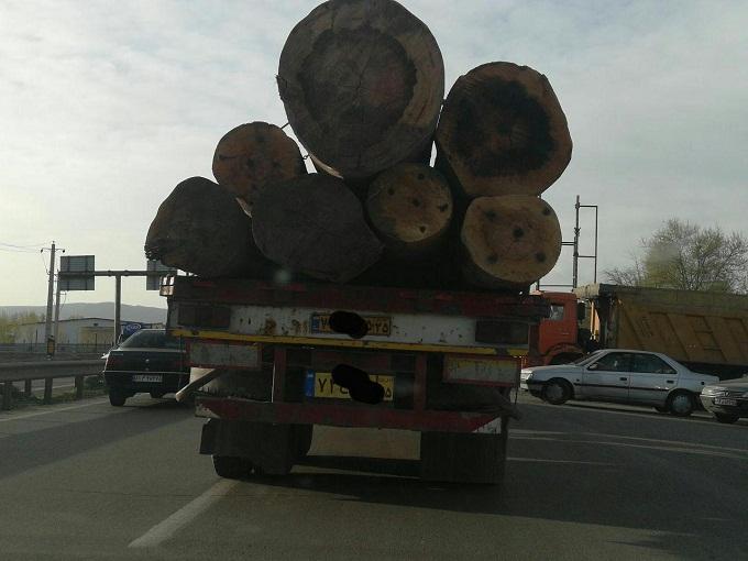 حمل درختان آذربایجان